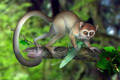 Primate Archicebus achilles