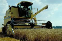Récolte d'une parcelle de blé