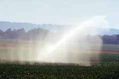 Irrigation maïs