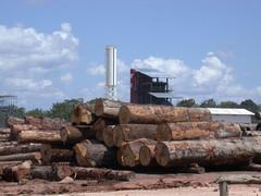 Stockage des bois de la scierie Mil Madeiras