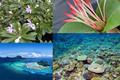 Les actions de recherche de la Polynésie française