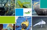 Colloque :  Impacts environnementaux de l'exploration et de l'exploitation des ressources minérales profondes